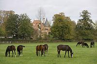 Europe/France/Normandie/Basse-Normandie/14/Calvados/Pays d'Auge/Victot Pontfol: Haras de Victot - Chevaux de race cob anglais au pré
