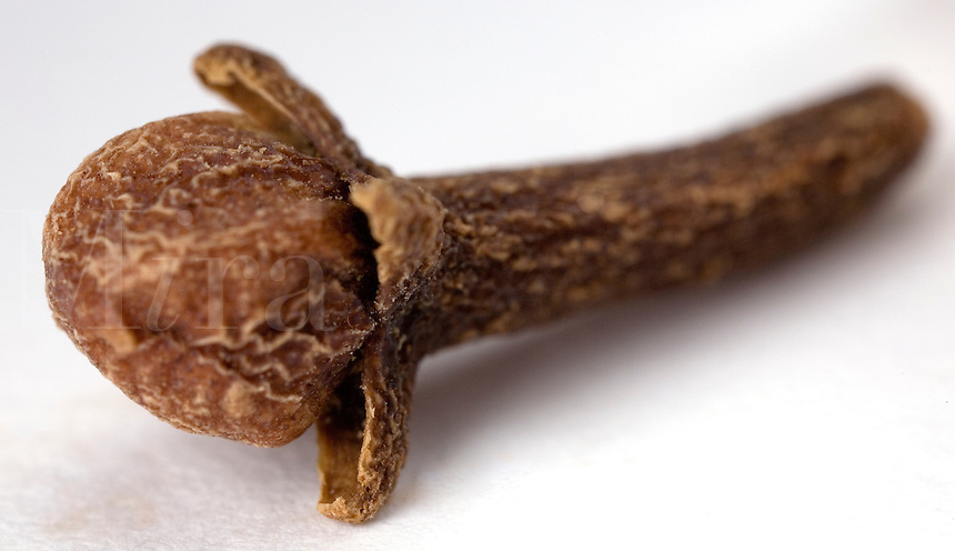 Macro close-up of a single whole clove on a white backdrop