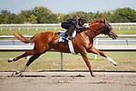 #61Fasig-Tipton Florida Sale,Under Tack Show. Palm Meadows Florida 03-23-2012 Arron Haggart/Eclipse Sportswire.