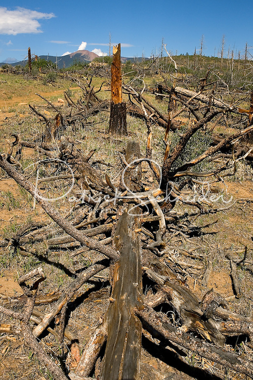Photo story of Philmont Scout Ranch in Cimarron, New Mexico, taken during a Boy Scout Troop backpack trip in the summer of 2013. Photo is part of a comprehensive picture package which shows in-depth photography of a BSA Ventures crew on a trek. <br /> Photo by travel photograph: PatrickschneiderPhoto.com