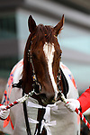 21 February 2010: Espoir City win the 27th running of the February Stakes at Tokyo Racecourse in Fuchu City.  21 February 2010: Espoir City win the 27th running of the February Stakes at Tokyo Racecourse in Fuchu City.  21 February 2010: Espoir City win the 27th running of the February Stakes at Tokyo Racecourse in Fuchu City.