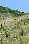 Derek Milne (74) starts a steep descent. Mammoth Adventure MTB Ride, Nelson<br /> Photo: Marc Palmano/shuttersport.co.nz