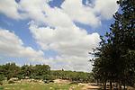 Kiryat Ata forest