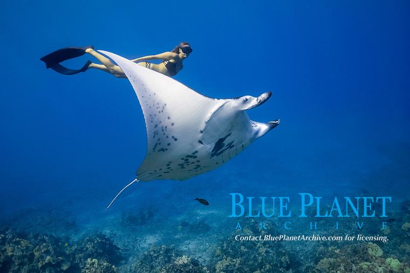 reef manta ray, Mobula alfredi, female, named, Vallaray, and free diver, Sandy Hammel, Veto's Reef, Kekaha Kai State Park, Kona Coast, Big Island, Hawaii, USA, Pacific Ocean, MR 489