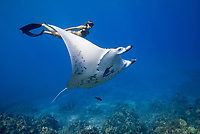 reef manta ray, Manta alfredi, female, named, Vallaray, and free diver, Sandy Hammel, Veto's Reef, Kekaha Kai State Park, Kona Coast, Big Island, Hawaii, USA, Pacific Ocean, MR 489