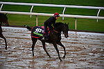 October 28, 2015:  Impassable (IRE), trained by Carlos Laffon-Parias and owned by Wertheimer et Frere, exercises in preparation for the Breeders' Cup Mile at Keeneland Race Track in Lexington, Kentucky on October 28, 2015. John Voorhees/ESW/CSM