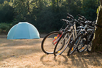 Bicycles leaning against a tree trunk with tent in background.