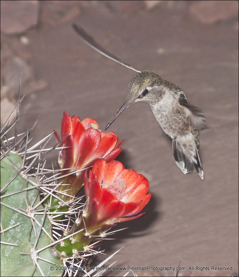 Hummingbird's Snack