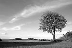Europa, DEU, Deutschland, Nordrhein Westfalen, NRW, Rheinland, Niederrhein, Rheurdt, Schaphuysener Hoehen, Typische Landschaft, Einzelner Baum, Cirruswolken, Kategorien und Themen, Natur, Umwelt, Landschaft, Jahreszeiten, Stimmungen, Landschaftsfotografie, Landschaften, Landschaftsphoto, Landschaftsphotographie, Wetter, Wetterelemente, Wetterlage, Wetterkunde, Witterung, Witterungsbedingungen, Wettererscheinungen, Meteorologie, Wettervorhersage<br /> <br /> [Fuer die Nutzung gelten die jeweils gueltigen Allgemeinen Liefer-und Geschaeftsbedingungen. Nutzung nur gegen Verwendungsmeldung und Nachweis. Download der AGB unter http://www.image-box.com oder werden auf Anfrage zugesendet. Freigabe ist vorher erforderlich. Jede Nutzung des Fotos ist honorarpflichtig gemaess derzeit gueltiger MFM Liste - Kontakt, Uwe Schmid-Fotografie, Duisburg, Tel. (+49).2065.677997, <br /> archiv@image-box.com, www.image-box.com]