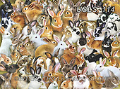 Lori, REALISTIC ANIMALS, REALISTISCHE TIERE, ANIMALES REALISTICOS, zeich, paintings+++++A Bundle of Bunnies_4_10in_72_Lori Schory,USLS114,#a#, EVERYDAY ,puzzle,puzzles