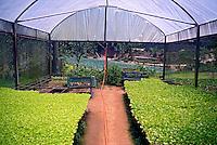 Sementes germinadas em estufa. Plantação de hortaliças em Teresopolis. Rio de Janeiro. 2014. Foto de Luciana Whitaker.