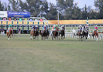 10 February 20: Wasted Tears (no. 14), ridden by Cornelio Velasquez and trained by Bart Evans, wins the 25th running of the grade 3 Honey Fox Stakes for fillies and mares four years old and upward at Gulfstream Park in Hallendale Beach, Florida.