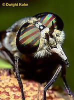 1F03-004z    Horse Fly - adult, compound eyes -  Hybomitra spp.