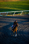 November 3, 2020: Devilwala, trained by trainer Ralph M. Beckett, exercises in preparation for the Breeders' Cup Juvenile Turf at  Keeneland Racetrack in Lexington, Kentucky on November 3, 2020. Alex Evers/Eclipse Sportswire/Breeders Cup