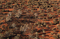 Desert landscape, aerial,  Central Australia, Northern Territory, Australia.