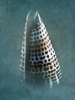 Close up of Lettered Cone Seashell.