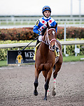HALLANDALE BEACH, FL - JAN 20:Starship Jubilee #4 with Jose Lezcano on board for trainer Kevin Attard heads back to the winner's circle after winning the $150,000 Sunshine Millions Filly and Mare Turf Stakes at Gulfstream Park on January 20, 2018 in Hallandale Beach, Florida. (Photo by Bob Aaron/Eclipse Sportswire/Getty Images)
