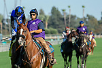 """ARCADIA, CA. SEPTEMEBER 29:  #4 Queen Blossom, ridden by Florent Geroux, in the post parade of the Rodeo Drive Stakes (Grade l) """"Win and You're in Breeders Cup Juvenile Fillies Division"""" on September 29, 2018, at Santa Anita Park in Arcadia, CA. (Photo by Casey Phillips/Eclipse Sportswire/CSM)"""