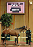 September 09, 2014: Hip #253 Scat Daddy - Siren Serenade colt consigned by Gainesway sold for $500,000 to Mayberry Farm at the Keeneland September Yearling Sale.   Candice Chavez/ESW/CSM