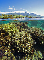 An above and below view at Lahaina, Maui. A view of the reef is underwater with Lahaina and the West Maui mountains in the background.