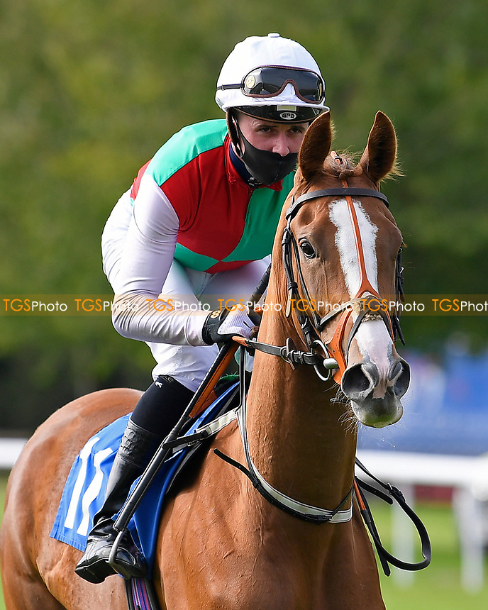 Up Before Dawn ridden by John Fahy goes down to the start of The Radcliffe & Co Novice Median Auction Stakes (Div 2) during Horse Racing at Salisbury Racecourse on 11th September 2020