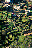 Spanien, Mallorca, Terrassenfelder bei Banyalbufar