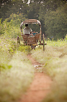 A donkey and cart travel down a track in the ancient city of Ava, in Myanmar