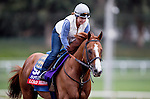 Lord Nelson, owned by Spendthrift Farm LLC and trained by Bob Baffert, exercises in preparation for the Breeders' Cup TwinSpires Sprint