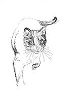 Huiskat (Felis domesticus)
