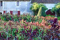 France, Indre-et-Loire (37), Chenonceaux, château et jardins de Chenonceau, le potager, différentes variétés d' amaranthes