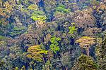 Bwindi Impenetrable National Forest, Uganda