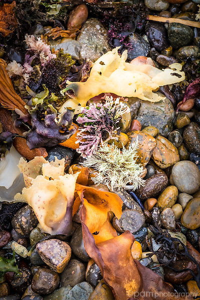 Colorful ocean plants on rocky shore