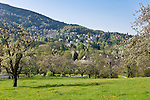Germany, Baden-Wuerttemberg, Markgraefler Land, Badenweiler: meadow with fruit trees | Deutschland, Baden-Wuerttemberg, Markgraeflerland, Badenweiler: Streuobstwiese