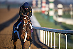 Dreamer'S Disease, trained by trainer Robertino Diodoro, exercises in preparation for the Breeders' Cup Juvenile