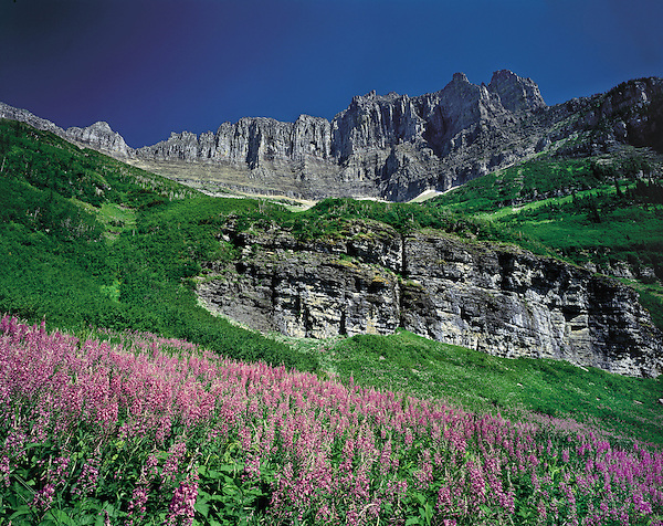 The Garden Wall and Fireweed wildflowers in Glacier National Park, Kalispell, Montana, USA. John offers private photo tours in Glacier National Park and throughout Montana and Colorado. Year-round.