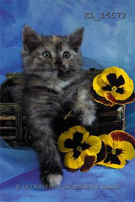 Interlitho, Alberto, ANIMALS, cats, photos, cat, yell.flowers(KL15572,#A#) Katzen, gatos