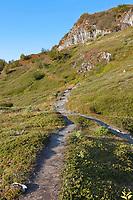 Harding Ice Field trail, Kenai Fjords National Park, Kenai mountains, Kenai Peninsula, southcentral, Alaska.