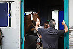 DEL MAR,CA-AUGUST 21: California Chrome rides the trailer at Del Mar Race Track on August 21,2016 in Del Mar,California (Photo by Kaz Ishida/Eclipse Sportswire/Getty Images)