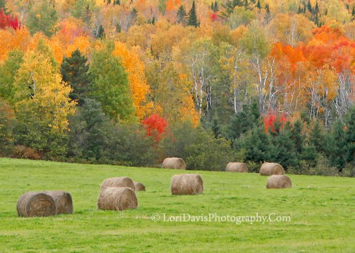 Autumn Round Bales, closer