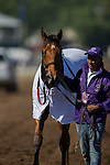 ARCADIA, CA - NOVEMBER 05: Champagne Room #6 , ridden by Mario Gutierrez, after winning the 14 Hands Winery Breeders' Cup Juvenile Fillies during day two of the 2016 Breeders' Cup World Championships at Santa Anita Park on November 5, 2016 in Arcadia, California. (Photo by Kaz Ishida/Eclipse Sportswire/Breeders Cup)