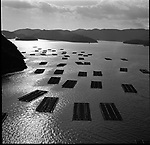 Aquaculture of oyster in Setouchi, Inland Sea.<br /> <br /> Aquaculture d'huîtres à Setouchi, mer intérieure.
