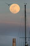 Aprils full moon over San Francisco's Coit Tower