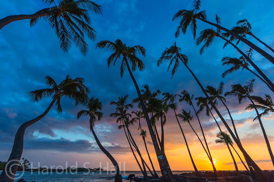 This grove of trees are accessed by a very rough dirt road, with gates that lock at about sunset.  This makes getting out in time a very iffy situation in the summer when taking sunset photos.  Most people that get this far are in a hurry to get to their destination beach, Puu Alii Bay, one of the most turquoise beaches around.  The old concession stands have long since fallen into disrepair and are now boarded up with do not enter signs.  It is still a very beautiful spot, away from the crowds. On this late day visit, I saw as many wild goats as tourists.
