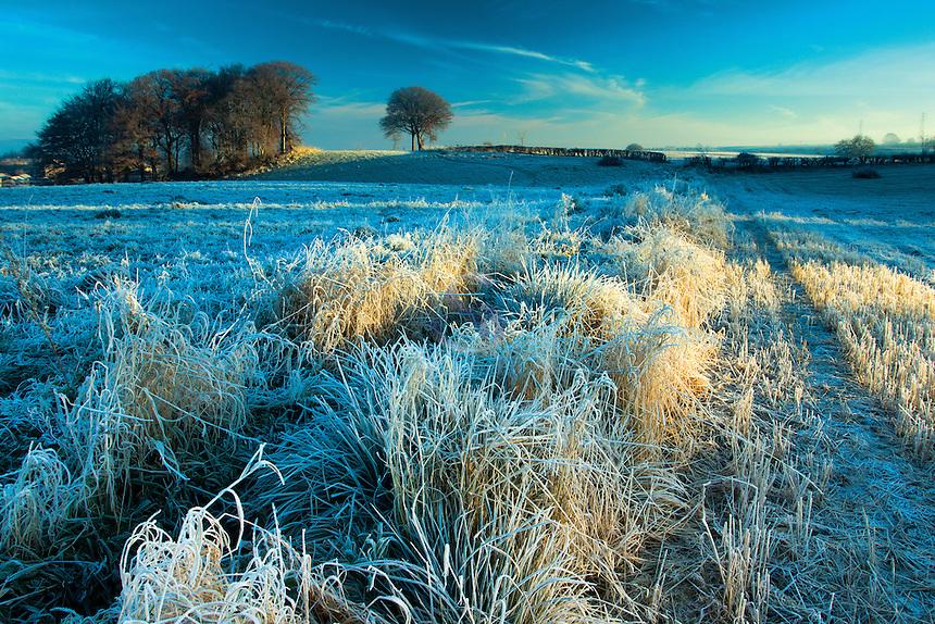 A winter's dawn, Neilston, East Renfrewshire