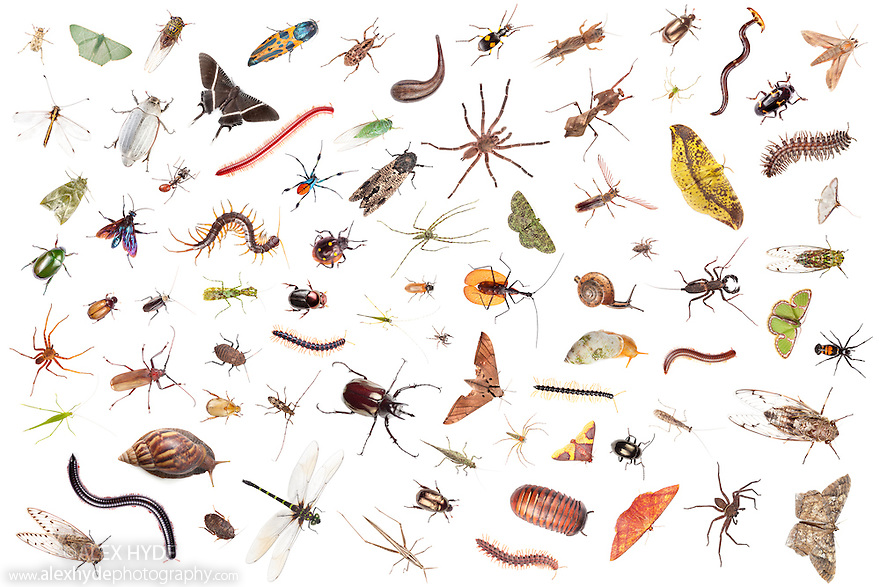 Rainforest invertebrates photographed on a  white background in mobile field studio in tropical rainforest. Sabah, Borneo, Malaysia. Digital composite.