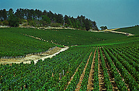 Chablis; Vaulorent, premier cru (first growth) vineyard