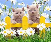 Xavier, ANIMALS, REALISTISCHE TIERE, ANIMALES REALISTICOS, cats, photos+++++,SPCHCATS818,#A#