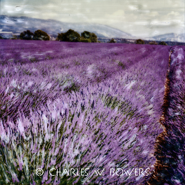 One of the crowning moments every summer in Provence is the lavendar in bloom. What a wonderful sight. The countryside turns shades of lavendar and perfumes the air.
