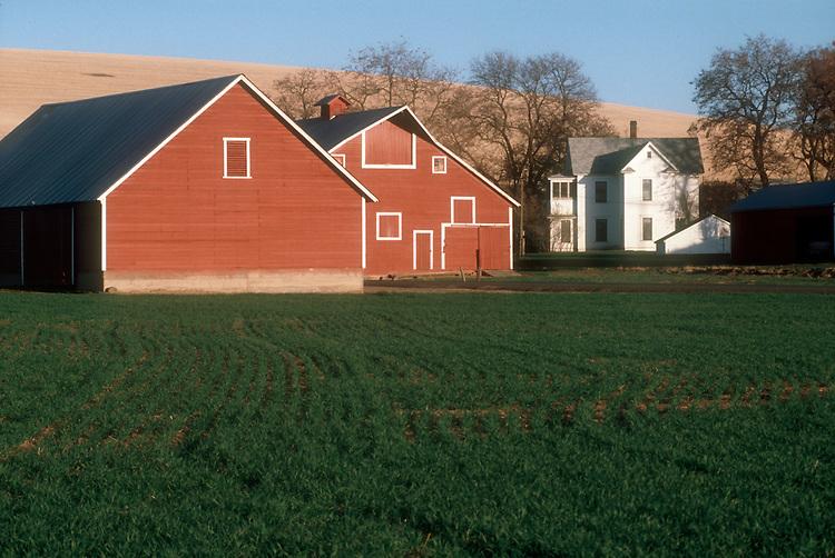 Farming, Dry Land wheat farm, farm house, Eastern Washington State, USA,