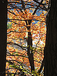 Fall Foliage at Devil's Lake State Park